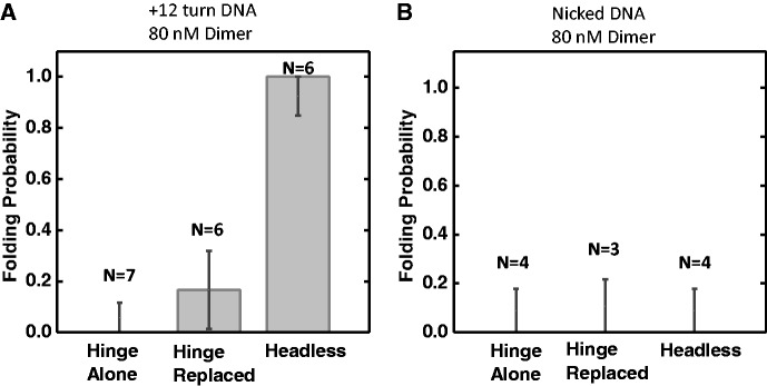 DNA compaction by SMC1/3 mutants. DNA folding probability was plotted for hinge domain alone, hinge replacement mutant and headless mutant at 80 nM SMC1/3 protein concentration on ΔLk = +12 DNA ( A ) or nicked DNA ( B ). The number of experiments done was indicated on each bar. Error bars represent standard error.