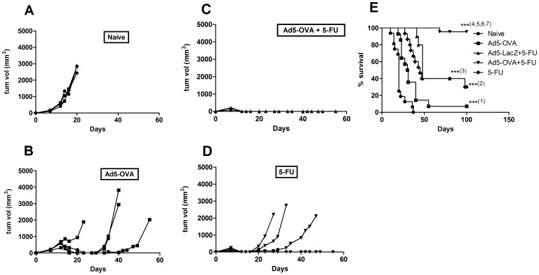 Anti-tumor effect and survival in mice treated with Ad5-OVA and/or 5-FU. C57BL/6 mice were challenged with E.G7 and then, 7 days post tumor challenge, given: no treatment (naïve); Ad5-OVA; Ad5-OVA +5-FU; or 5-FU. A–D. The tumor volumes for each mouse from one representative experiment are shown. E. Survival graph representing four pooled experiments. Total number of mice for each treatment was: n = 15 for naïve group, n = 14 for Ad5-OVA alone group, n = 21 for Ad5-OVA +5-FU group, n = 10 for Ad5-LacZ +5-FU group, and n = 15 for the 5-FU alone group. Statistical analysis (Log-rank (Mantel-Cox) test) of survival data revealed that mice survived significantly longer, compared to untreated mice, when treated with Ad5-OVA alone (p