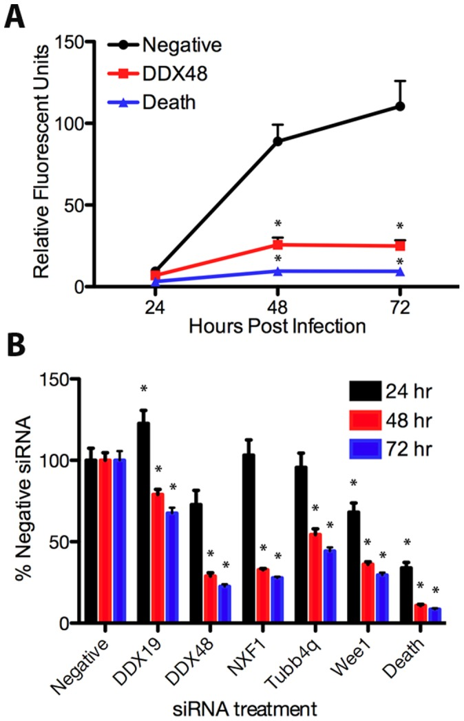 siRNA against human genes inhibits T. gondii growth. HeLa cells were transfected with siRNA pools to the indicated gene for 24 hours, then infected with 2.5×10 4 mCherry-expressing parasites. Fluorescent measurements were taken at 24, 48, and 72 hours post infection. (A) Replication of T. gondii as measured by fluorescence in HeLa cells transfected with DDX48 siRNA (DDX48, squares), AllStars Negative Control siRNA (negative, circles), or AllStars Hs Cell Death Control siRNA (death, triangles). (B) Replication of T. gondii graphed as the percent growth of wells treated with AllStars Negative Control siRNA (% negative siRNA) at 24 (black), 48 (red), and 72 (blue) hours post infection. Asterisks indicate a significant (p