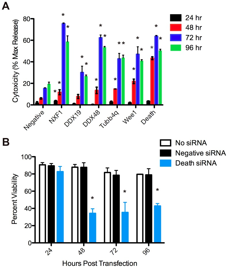 siRNAs, not transfection alone, induces host cell toxicity over time. (A) At 24, 48, 72 and 96 hours post transfection, medium from HeLa cells transfected with 25 nM siRNA pools was mixed with an equal volume CytoToxONE assay reagent. Fluorescence of samples was measured and data plotted as a percentage of the maximum LDH release obtained from lysed cells (% max release). (B) HeLa cells were treated with transfection medium alone (white) or transfected with AllStars Negative Control (black) or AllStars Hs Cell Death Control (blue) siRNAs. At the indicated times, cells were trypsinized and the number of viable cells determined by trypan blue exclusion. Asterisks indicate a significant (p