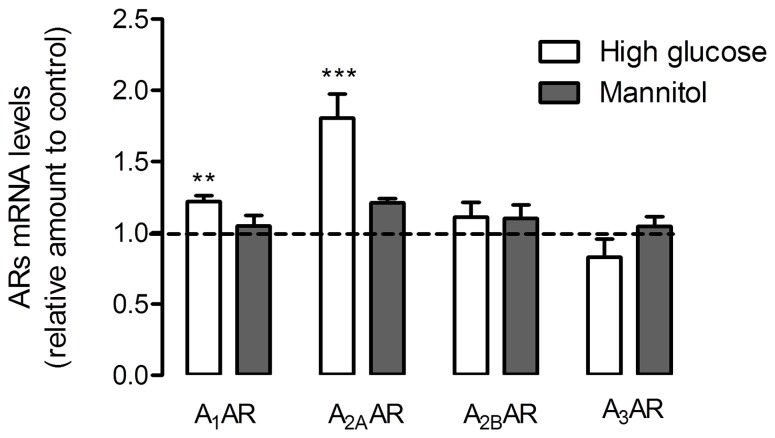 Adenosine receptor expression levels in cultured retinal cells. Cells were treated as previously described in Figure 1 . Total RNA was isolated using the RNeasy Mini Kit from Qiagen according to the manufacturer's instructions. Data from the target genes were normalized using the expression of three stable reference genes and the mRNA level ratios calculated using the altered Pfaffl model for normalizations with multiple reference genes. Experiments were carried out in triplicate. The mean±SEM of 3–4 independent experiments was analyzed with one-way ANOVA test and Tukey's multiple comparison test. **p