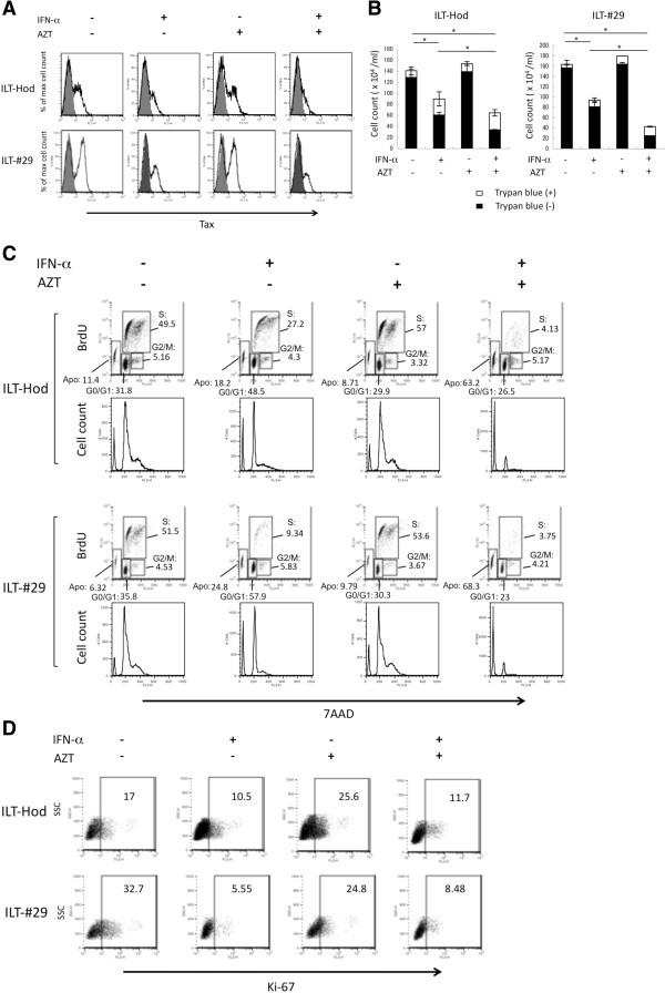 Effects of IFN-α and AZT on HTLV-1 expression and cell growth of HTLV-1 infected cells. ILT-Hod and ILT-#29 cells (10 6 /ml) were cultured in the absence or presence of IFN-α (3000 IU/ml) and/or AZT (10 μM) as indicated, and HTLV-1 expression ( A ), cell growth ( B ), cell cycle ( C ), and Ki-67 expression ( D ) in the cells were evaluated. A . Expression of intracellular Tax protein 3 days after the initiation of culture was evaluated by flow cytometry following stained with anti-Tax (open histogram) and isotype control (closed histogram) antibodies. B . ILT-Hod and ILT-#29 cells were similarly treated with IFN-α and/or AZT, and maintained with addition of equal volumes of fresh medium without IFN-α or AZT on the day 1 and 3, then viable (closed bar) and non-viable (open bar) cell numbers in cultures were evaluated by trypan blue exclusion on the day 8. *p