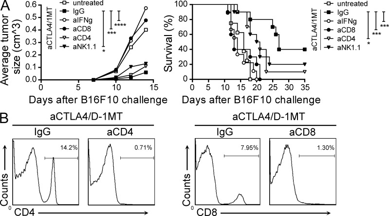 Anti–CTLA-4/1MT antitumor effect is T cell dependent. (A) Mean tumor growth and tumor-free survival curves for C57BL/6 mice challenged with B16F10 tumors i.d. and treated with anti–CTLA-4/1MT plus depleting antibodies for IFN-γ, CD8, CD4, or NK/NKT, or a corresponding dose of IgG isotype control (IgG). P-values are for two-way ANOVA and Log-Rank test (*, P