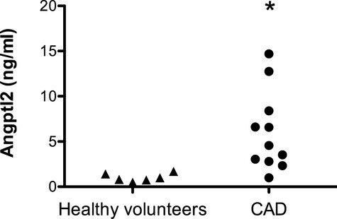 Plasma angptl2 levels are higher in CAD patients than in healthy volunteers. Circulating angptl2 levels were quantified in CAD patients (n=11) and in age‐matched healthy volunteers (n=6) by ELISA. Data are presented as a dot plot. * P