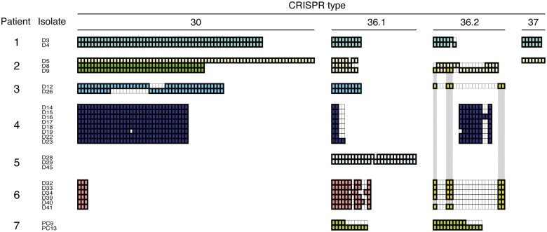 Spacer contents of Porphyromonas gingivalis isolates from seven patients in four CRISPR loci. Spacer arrays of 26 isolates from 7 patients are shown at each CRISPR locus. Each box indicates one spacer. The spacers in the arrays exhibit high nucleotide similarity to each other among the isolates if they are aligned vertically and have the same color. Blank boxes indicate absent spacers in the particular isolates. In patient no. 2, two colors are used because the D5 isolate has a type 30 spacer array that is distinct from those of D8 and D9. The spacers in type 36.2, shared among seven isolates of three patients, are indicated by deep yellow boxes and emphasized by dark gray belts.