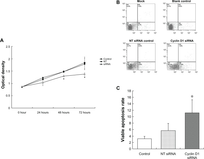 Cell viability, apoptosis induced by cyclin D1 silence. Notes: ( A ) At 0, 24, and 48 hours, cell viability was not significantly different between cyclin D1-siRNA and NT siRNA transfected cells, but a marked decrease of cell viability was observed at 72 hours post-transfection (Z = −2.241, P = 0.025). ( B and C ) At 30 hours after siRNA transfection, viable apoptosis was significantly increased in cyclin D1 siRNA-transfected cells compared with NT siRNA group (Z = −2.650, P = 0.008). Abbreviation: NT-siRNA, nontargeting small interfering RNA.