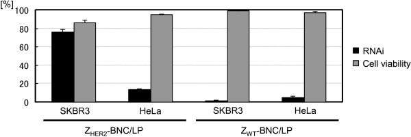 Quantification of RNAi (black bars) and cell survival rates (gray bars) of HER2-positive SKBR3 and HER2-negative HeLa cells treated by siRNA combined with Z HER2 -BNC/LP (left side) and Z WT -BNC/LP (right side) (final conc. 25 nM as siRNA).