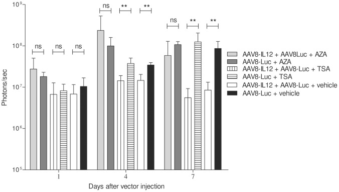 DNA demethylating agents but not histone acetylation inhibition revert the IFN-γ inhibitory effect. C57BL/6 mice received 2.5 × 1011 vg/kg of AAV8-luc vector alone or in combination with 1.5 × 109 vg/kg of AAV8-IL12 vector. One group of 5 mice treated with AAV8-luc or AAV8-luc in combination with AAV8-IL12 received 5′-Azacytidine (AZA) intraperitoneally at a dose of 1 mg/kg every 24 hours starting the day of vector injection. A second group of 5 mice treated with AAV8-luc or AAV8-luc in combination with AAV8-IL12 received 2 mg/kg of trichostatin A (TSA) were injected IP every 48 hours starting the day of vector injection. A third group of animals received only vector injection. Luciferase expression levels were analyzed in both groups of animals at days 1, 4, and 7 using a Xenogen in vivo luminometer, experiments could not be performed at longer time points due to the toxicity of 5-AZA long term treatment. Luciferase expression was quantified and represented as photons/second. The data are shown as mean ± standard deviation (SD). The differences in luciferase expression were statistically evaluated by Student t test (**p