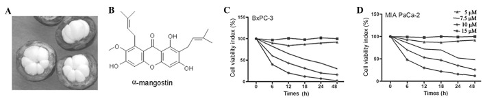 Effect of α-mangostin on the viability of BxPC-3 and MIAPaCa-2 cells. (A) Garcinia mangostana Linn (GML). (B) Chemical structure of α-mangostin. (C) The BxPC-3 and (D) MIAPaCa-2 cells were treated with various concentrations (0, 5, 7.5, 10 or 15 μ M) of α-mangostin for 6, 12, 18, 24 and 48 h. The number of surviving cells was directly proportional to the formazan level, which was measured spectrophotometrically at 563 nm. Values represent the mean ± SD of three independent experiments. * P