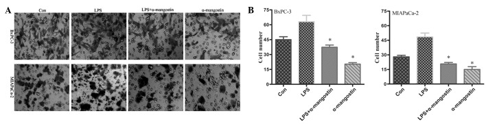 Effects of α-mangostin on the invasion of BxPC-3 and MIAPaCa-2 pancreatic cancer cells. The cells were treated with LPS (5 g/ml) and/or α-mangostin (5 M) for 24 h, then subjected to analyses for cell invasion. LPS significantly (P