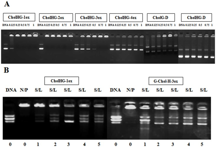 Gel electrophoresis to find out DNA binding and release efficiency. Electrophoretic gel patterns for the lipoplex-associated pEGFP-C3 plasmid DNA. (A) DNA binding efficiency of different gemini lipid based lipoplexes. The N/P ratios are indicated at the top of each lane. (B) SDS mediated DNA release from representative lipid based lipoplexes. The SDS/lipid ratios are indicated below each lane. Both experiments were performed using 0.2 µg of DNA per well.