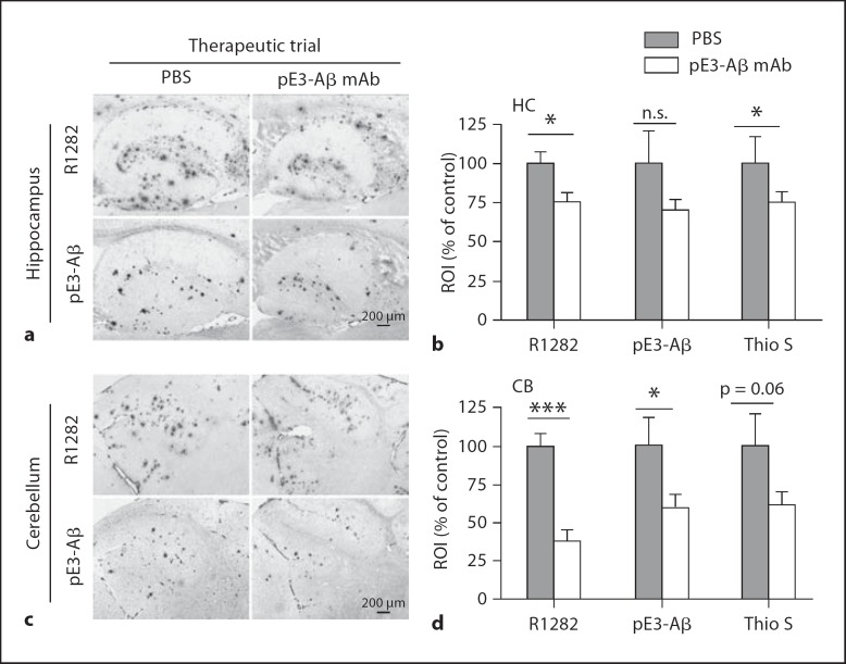 In a therapeutic study initiated well after the onset of cerebral <t>Aβ</t> deposition and gliosis, weekly passive immunization with <t>anti-pE3-Aβ</t> mAb07/1 in 23-monthold APPswe/PS1ΔE9 mice for 7 weeks resulted in the attenuation of pE3-Aβ and general Aβ (R1282 IR) deposition as well as fibrillar amyloid (Thioflavin S) in the hippocampus ( a , b ) and cerebellum ( c , d ) compared to PBS control mice. Immunohistochemical results ( a , c ) and Thioflavin S labeling were quantified by image analysis ( b , d ). Absolute values are provided in table 1. Scale bars, 200 µm. p values: * p > 0.05; *** p > 0.001; n.s. = nonsignificant (p = 0.11); p = 0.06 (strong trend).