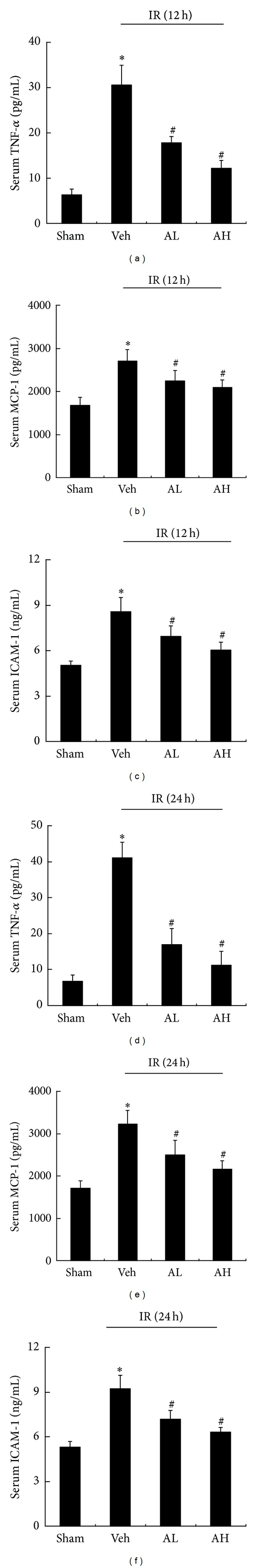 AS-IV decreased the serum levels of TNF- α , MCP-1, and <t>ICAM-1</t> in rats with ischemic AKI. Serum levels of TNF- α (a), MCP-1 (b), and ICAM-1 (c) in sham, vehicle-, or AS-IV-pretreated rats at 12 h of reperfusion. Serum levels of TNF- α (d), MCP-1 (e), and ICAM-1 (f) in sham, vehicle-, or AS-IV-pretreated rats at 24 h of reperfusion. Results are expressed as mean ± SD ( n = 8). * P