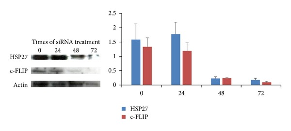Immunoblotting shows effective silencing of the heat shock protein 27 (Hsp27) and c-FLIP in PC-3 cells after siRNA treatment.