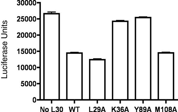 L30 repression of UGA recoding correlates with SECIS-binding. UGA recoding assays were performed using the luc/UGA/TR1 reporter construct as described in the legend to Figure 4 A. Reactions contained either no L30 or 44 pmol of wild-type or mutant L30 proteins. Results are expressed as means ± SEM.