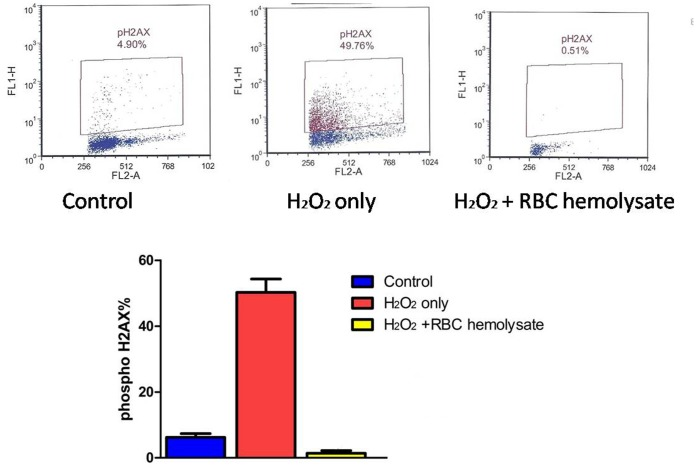 Induction of activation and H2AX phosphorylation in PBMC cells exposed to 200 µM H 2 O2 for 40 min. (a) PBMC were untreated; or (b) treated with 200 µM H 2 O 2 for 40 min;(C) or treated with 200 µmol/L H 2 O 2 for 40 min with hemolysate, each detected immunocytochemically, measured by laser scanning cytometry (scatterplots). The dashed skewed lines show the upper threshold level of PBMC and phosphorylated H2AX expression. % of PBMC expressing H2AX (n = 3) is shown in the graph.