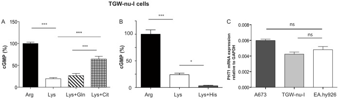 nNOS in TGW-nu-I cells can use both, citrulline-to-arginine recycling and protein degradation as intracellular substrate source. ( A ) and ( B ) NO measurements and data analyses were performed by RFL-6 reporter cell assays as described in Figure 1 . Thirty min pre-incubations and transfers were performed in LS with the indicated amino acids (single or in combination): 1 mM arginine, 1 mM lysine, 4 mM glutamine, 4 mM citrulline, or 4 mM histidine. The basal cGMP content of the RFL-6 cells was subtracted. The values obtained from cells incubated in 1mM lysine were calculated as % of the mean of the values obtained from the corresponding control cells incubated in 1 mM arginine. Columns represent mean ± S.E.M. ( n = 6 (A) and n = 6–12 (B), one way ANOVA with Bonferroni post hoc test). ( C ) Total RNA from A673, TGW-nu-I, and EA.hy926 cells (0.5 µg both) was analyzed by qRT/PCR for PHT1 expression as described in the methods section. GAPDH was chosen as housekeeping gene for relative determinations. (means ± S.E.M., n = 3).