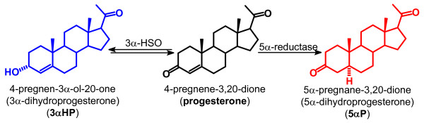 Conversion of progesterone to 3α-dihydroprogesterone (3αHP) and 5α-dihydroprogesterone (5αP) . In vitro studies have shown that both ER/PR-positive and -negative human breast tissues and cell lines are able to convert progesterone to 3αHP and 5αP by the actions of 3α-hydroxysteroid oxidoreductase (3α-HSO) and 5α-reductase, respectively.