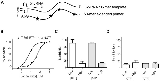 Inhibition of recombinant IAVpol using a 50-mer RNA template. (A) Principle of the reaction. Recombinant IAVpol (PA/PB1/PB2) was incubated in the presence of a 50-mer RNA template sequence derived from the 3′-end of the PA gene of the NanChang strain [12] . The 15-nt 5′vRNA oligo that is partially complementary to the 3′vRNA is needed as promoter for the enzyme. The 5′-pApG dinucleotide primer is extended and allows for multiple incorporation events of α- 33 P-GMP used as tracer (star). (B) Representative curves of inhibition potency of <t>3′dGTP</t> and T-705 RTP against IAVpol RNA synthesis activity. IC 50 s were determined by adding increasing concentrations of each inhibitor, and quantitative analysis of the amount of remaining full length RNA product is expressed as % inhibition (see Materials and Methods ). Each experiment was conducted at least twice to calculate the average value and standard deviation. (C) The inhibition percentage was measured in the presence of a saturating concentration of T-705 RTP (100 µM), and either low (3 µM) or high (300 µM) concentration of one of the two purines GTP or ATP. (D) The same experiment as (C) instead with either low (3 µM) or high (300 µM) of pyrimidine UTP or CTP.