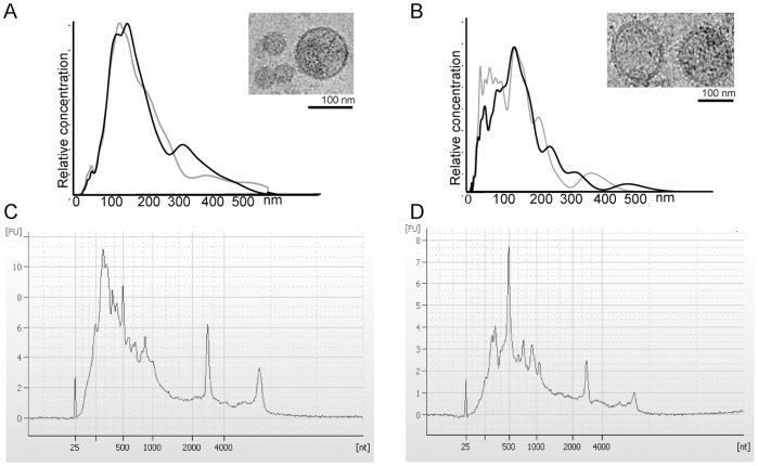 Characterization of EVs. Characterization of EVs from MLP29 (A, C) and rat primary hepatocytes (RH) (B, D). The NTA analyses of two independent samples for each cell type show more heterogeneous vesicle populations released by primary culture of hepatocytes. Cryo-TEM pictures show membrane vesicles of different sizes (insets A–B). Bioanalyzer profiles of total RNA extracted by RNeasy from both cell types are similar with a wide distribution on size and also the presence of a reduced amount of ribosomal RNAs (C–D).