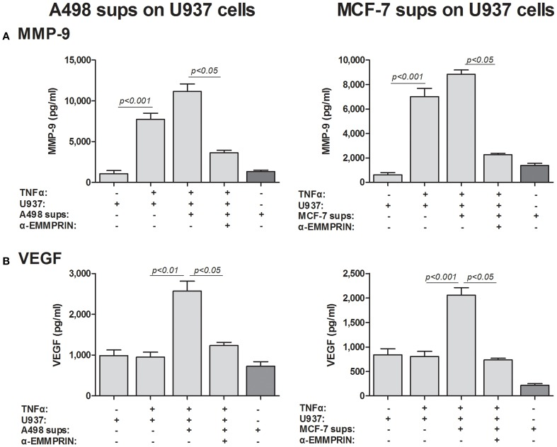 Effect of cancer cell supernatants on monocyte expression of VEGF and MMP-9 is mediated through soluble EMMPRIN . 2 × 10 5 U937 cells were separately incubated in the presence of TNFα (1 ng/ml) for 48 h with or without the addition of diluted (1:4) supernatants derived from A498 or MCF-7 cells, and with the neutralizing anti-EMMPRIN antibody (2 ng/ml). Concentrations of (A) MMP-9 and (B) VEGF were determined by ELISA ( n = 5).