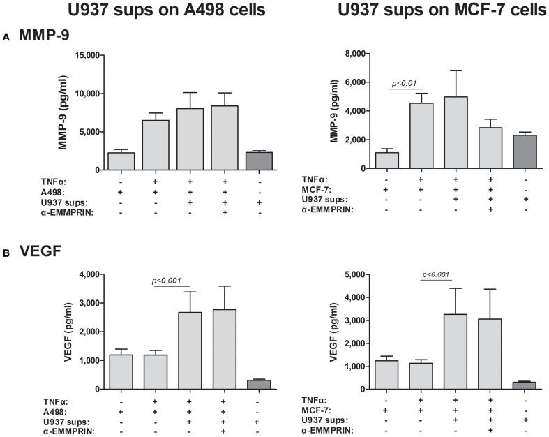 Effect of monocyte supernatants on cancer cell expression of VEGF and MMP-9 . 2 × 10 5 A498 or MCF-7 cells were separately incubated in the presence of TNFα (1 ng/ml) for 48 h with or without the addition of diluted (1:4) supernatants derived from U937 cells, and with the neutralizing anti-EMMPRIN antibody (2 ng/ml). Concentrations of (A) MMP-9 and (B) VEGF were determined by ELISA ( n = 5).
