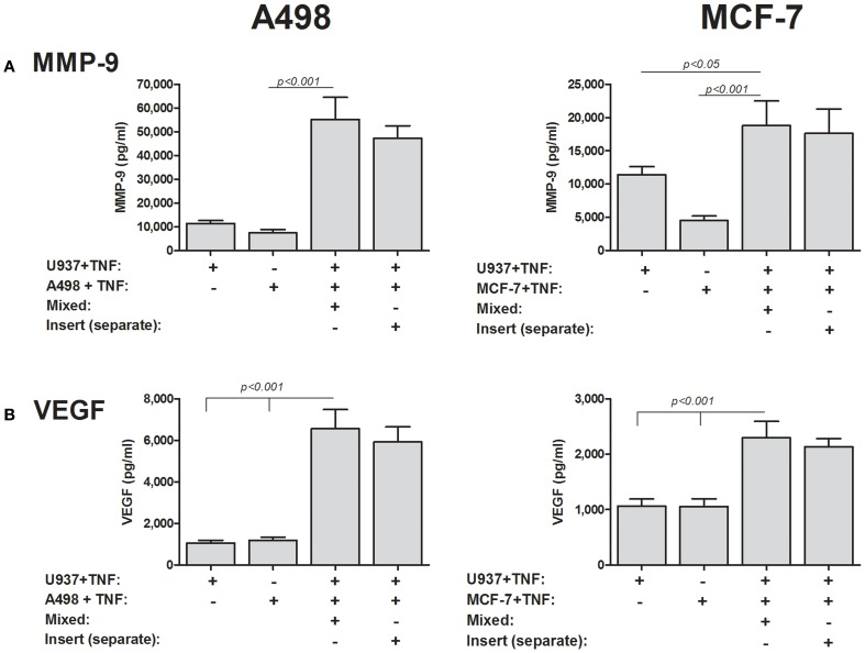 Cell–cell contact is not required for induction of MMP-9 and VEGF . 2 × 10 5 A498 or MCF-7 cells or 1 × 10 5 U937 cells were incubated with TNFα (1 ng/ml) for 48 h, separately, in a mixed co-culture where cell–cell contact was allowed, or in inserts with a small pore size (0.3 μm) that precluded cell migration and cell–cell contact. Concentrations of (A) MMP-9 and (B) VEGF were determined by ELISA ( n = 8).