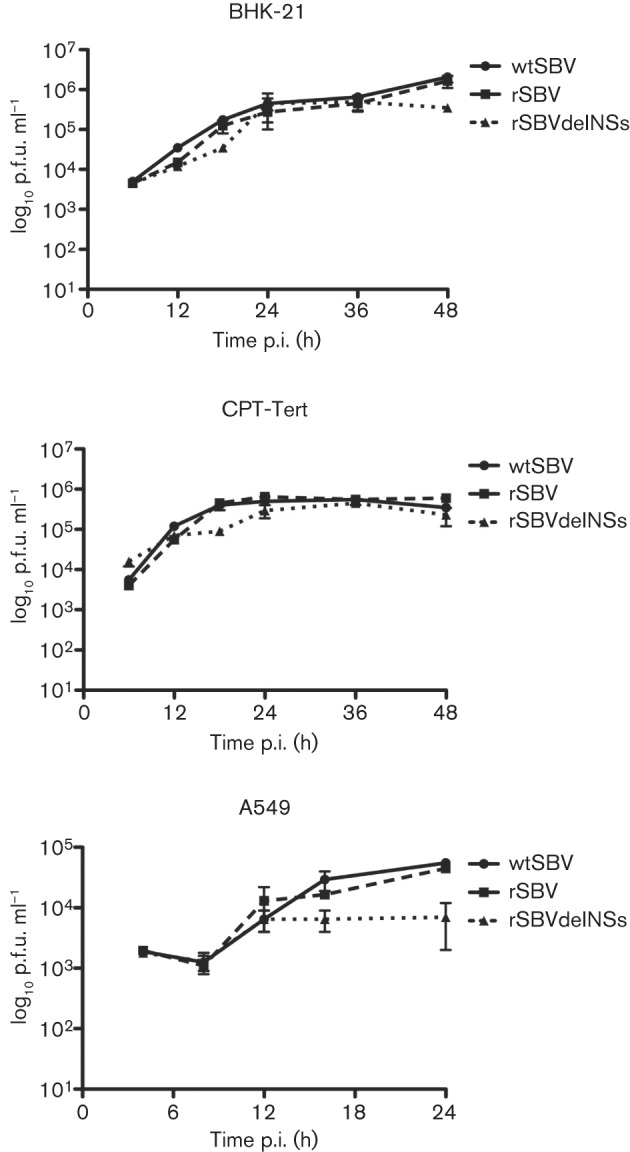 Virus growth curves. BHK-21, CPT-Tert or A549 cells were infected with wtSBV, rSBV or rSBVdelNSs at an m.o.i. of 3 and incubated at 37 °C. The titre of virus released into the supernatant at different times post-infection (p.i.) was determined by plaque assay in BHK-21 cells.