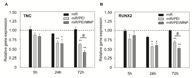 Efficient knockdown of miR-335 target genes. ( A , B ) hMSCs were transfected with miR/PEI or miR/PEI/MNP complexes and relative gene expression of TNC ( A ) and RUNX2 ( B ) was measured by real-time PCR 5, 24 and 72 h after transfection. Cells treated with miR only were used as control. Dashed line indicates gene expression in untransfected cells. Values were normalized to GAPDH expression and are represented as mean ± standard error, n = 5, * p ≤ 0.05 versus miR, ** p ≤ 0.001 versus miR, ## p ≤ 0.001 versus miR/PEI - mediated transfection.