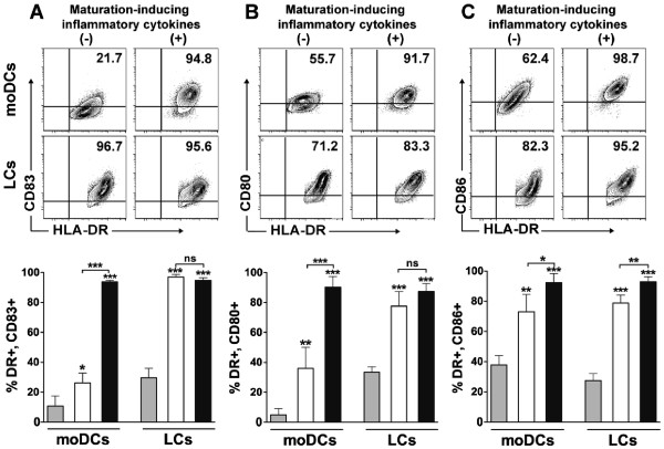 mRNA electroporation induces the maturation and activation of LCs to a greater magnitude than for moDCs. Immature moDCs and LCs were electroporated with eGFP mRNA and then cultured with (+) or without (−) standard maturation-inducing inflammatory cytokines. After 24 hours, cells in each experimental group were compared with pre-electroporation controls by flow cytometry for the expression of phenotypic markers of DC maturation and activation, based on the upregulation of (A) CD83, (B) CD80, and (C) CD86, respectively. Representative dot plots of eGFP mRNA-electroporated moDCs and LCs from one of three independent experiments are shown in the top row. Pooled data for each experimental group (mean ± SD, n = 3 independent experiments) are shown in the bottom row (gray bar = pre-electroporation control, white bar = post-electroporation without inflammatory cytokines, black bar = post-electroporation with inflammatory cytokines). * P