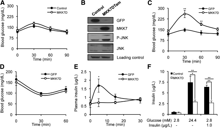 Tamoxifen-inducible JNK activation in adult mice causes glucose intolerance. A : GTT of control and MKK7DTam 8-week-old mice before treatment with tamoxifen. B : Immunoblot analysis of GFP, MKK7, phosphorylated JNK (P-JNK), and JNK in extracts from isolated pancreatic islets of tamoxifen-treated control and MKK7DTam mice. C , D , and E : GTT, ITT, and glucose-stimulated insulin secretion, respectively, in tamoxifen-treated control and MKK7DTam mice. F : Insulin secretion of pancreatic islets isolated from tamoxifen-treated control and MKK7DTam mice stimulated with glucose and insulin as indicated. Unless indicated, assays were performed 2 weeks after tamoxifen treatment with 10 animals per group. * P