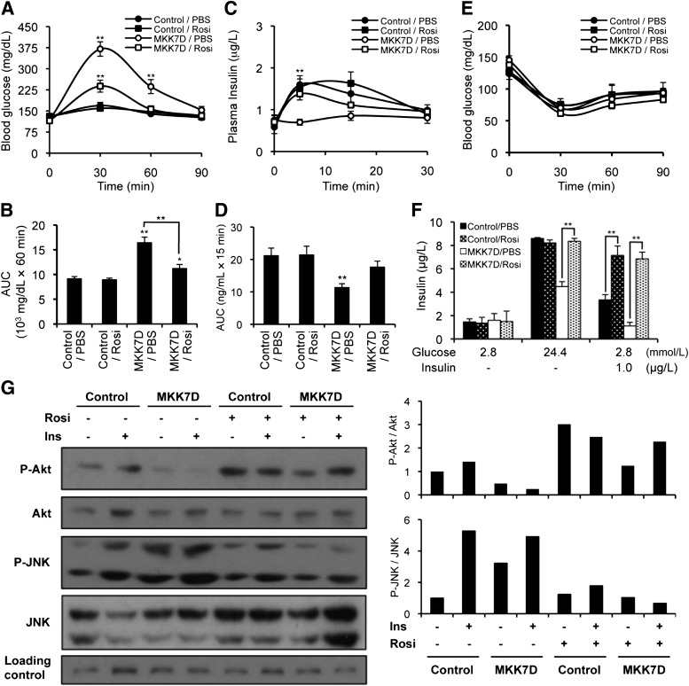 Rosiglitazone counteracts JNK-induced β-cell dysfunction. GTT ( A ) and the corresponding area under the curve (AUC) for the first 60 min ( B ), glucose-stimulated insulin secretion ( C ), the corresponding AUC for the first 15 min ( D ), and ITT ( E ) performed in control and MKK7D 2-month-old mice treated for 10 days with rosiglitazone (Rosi) or PBS as indicated. F : Insulin secretion of pancreatic islets isolated from control and MKK7D mice treated with PBS or rosiglitazone. Islets were stimulated with glucose and insulin as indicated. G : Immunoblot analysis performed in extracts of pancreatic islets from control and MKK7D mice treated with rosiglitazone and insulin (Ins) (20 min) as indicated. The ratios of phospho-Akt (P-Akt) and phospho-JNK (P-JNK) to AKT and JNK, respectively, are represented in the right panel . Assays were performed with at least 10 animals per group and repeated at least 3 times. * P
