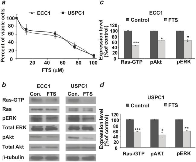 FTS downregulates active Ras-GTP and its downstream signaling, leading to inhibition of cell proliferation in ECC1 and USPC1 EC cell lines ( a ) Dose-dependent decrease in the number of viable ECC1 or USPC1 cells as a function of FTS concentration. ECC1 and USPC1 cells were plated in 24-well plates, and treated after 24 hr with 0.1% DMSO (control) or FTS (100, 75, 50, or 25 μM). After 4 days the cells were counted. The IC 50 values of FTS in both cell lines were derived from the graph equations. ( b ) Immunoblots of Ras, Ras-GTP (active Ras), phospho-ERK, ERK, phospho-Akt, Akt, and β-tubulin (loading control) prepared from ECC1 and USPC1 control lysates and from lysates of ECC1 and USPC1 cells treated with 50μM FTS. ECC1 and USPC1 cells were plated in 10-cm plates and treated after 24 hr with 0.1% DMSO (control) or 50μM FTS. Three days later cells were lysed and subjected to western blotting with anti-pan-Ras, anti-Akt, anti-pAkt, anti-pERK, anti-ERK or anti-β-tubulin Abs (loading control). ( c ) FTS significantly decreases Ras-GTP, pERK, and pAkt both in ECC1 cells and ( d ) in USPC1 cells. There were no significant differences in total Ras, total ERK, total Akt or β-tubulin between control and FTS-treated cells. These results indicated that FTS acts in both cell lines as an inhibitor of active Ras and its downstream signaling. *, ** and *** are compared with the control for each cell line. * p