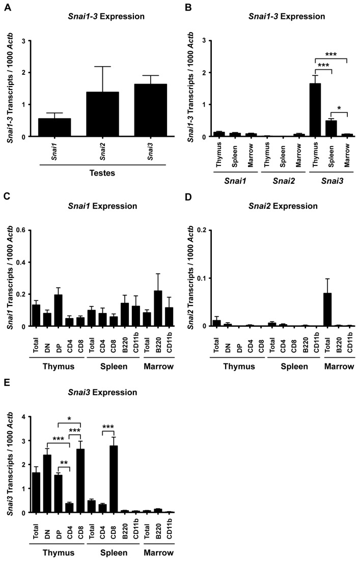 Snai1-3 transcripts are differentially expressed in primary and secondary lymphoid organs of wild type mice. RNA was isolated and cDNA synthesized as described in the Materials . Quantitative real-time RT-PCR was performed via LightCycler as described in the Materials . (A) cDNA from testes served as a positive control for all RT-PCR analysis. (B) Snai1-3 transcript analysis of cDNA generated from total thymus, spleen, and bone marrow. (C–E) RT-PCR of specific cell subsets demonstrating the distribution patterns of Snai1 (C), Snai2 (D), and Snai3 (E) expression. Three mice were analyzed for the testes. At least 4 mice were analyzed per immune cell type. Levels of Snai1-3 transcripts are relative to 1000 Actb transcripts per each individual sample. Data are represented by the mean ± SEM. One-way ANOVA with Bonferroni post hoc test: * p