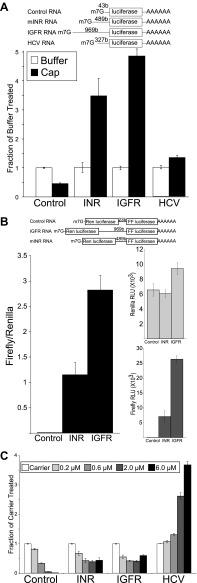 Mammalian insulin receptor and insulin-like growth factor receptor 5′UTR provide resistance to eIF4a inhibition. ( A ) Diagram of RNAs used in the in vitro translation assays. ( B ) In vitro Translation in the absence (white bars) and presence (black bars) of excess <t>m7G</t> analogue. Data are plotted as the fraction activity of the mock treated extracts (error bars indicate SEM). ( C ) Titration of hippuristanol in in vitro translation assays. Data are plotted as the fraction activity of the mock treated extracts (error bars indicate SEM). DOI: http://dx.doi.org/10.7554/eLife.00542.007