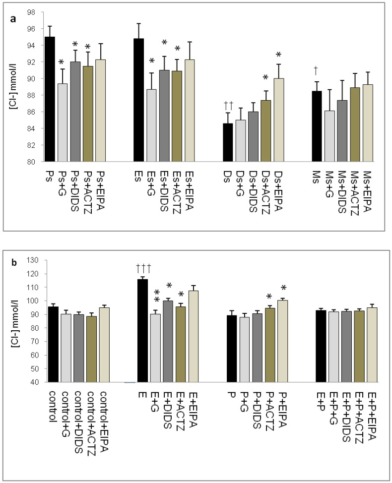 Uterine fluid Cl- concentrations with and without the presence of protein/enzyme inhibitors in (a) rats at different stages of the oestrous cycle and (b) ovariectomized rats receiving steroid replacement. The highest Cl - level was observed under E influence. Glibenclamide and ACTZ administration caused a decrease in Cl- concentration in rats at Es, Ps and following E treatment. Meanwhile, Cl - concentration was reduced under P influence. ACTZ and EIPA administration caused an increase in Cl- concentration at Ds and following P treatment. E: 0.2µg 17β-oestradiol, P: 4mg progesterone, E+P: 0.2 µg 17β-oestradiol + 4mg progesterone. Ps: proestrus, Es: estrus, Ms: metestrus, Ds: diestrus. G: glibenclamide, ACTZ: acetazolamide, DIDS: 4,4'-diisothiocyanatostilbene-2,2'-disulfonic acid disodium salt hydrate and EIPA: 5-(N-Ethyl-N-isopropyl)-amiloride † as compared to Es or control, * as compared with the group without inhibitor. (*:p