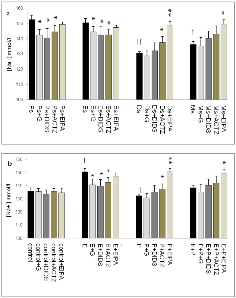 Uterine fluid Na + concentration with and without the presence of protein/enzyme inhibitors in (a) rats at different stages of the oestrous cycle and (b) steroid replaced ovariectomized rats. Na + concentration was high under E influence, however was low under P influence. Glibenclamide and DIDS administration caused a decrease in Na+ concentration at Es, Ps and following E treatment. Meanwhile, ACTZ and EIPA administration caused an increase in Na + concentration under P influence. E: 0.2µg 17β-oestradiol, P: 4mg progesterone, E+P: 0.2 µg 17β-oestradiol + 4mg progesterone. Ps: proestrus, Es: estrus, Ms: metestrus, Ds: diestrus. G: glibenclamide, ACTZ: acetazolamide, DIDS: 4,4'-diisothiocyanatostilbene-2,2'-disulfonic acid disodium salt hydrate and EIPA: 5-(N-Ethyl-N-isopropyl)-amiloride. †as compared to control and Es, * as compared to the group without inhibitor (*, † :p