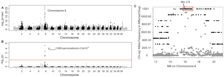 Manhattan plots of GWAS results for NTDs in Weimaraners (4 cases, 96 controls; λ = 1.03). A . Raw p-values. Y axis: −log 10 of the raw p-values; X axis: SNPs color coded by chromosome. The lowest p-values are on chromosome 8. B . 100K Max (T) permutation results. Y axis: −log 10 of the permuted p-value; X axis: SNPs color coded by chromosome. The red line denotes genome wide significance (p≤0.05; −log 10≥1.3). C . Chi-square and allele frequencies for affected dogs by Mb on chromosome 8. The interval with the highest chi-square association (χ 2 = 119) and allele frequency = 1 within affected dogs is boxed, defining the critical interval. NKX2-8 is located within this interval.