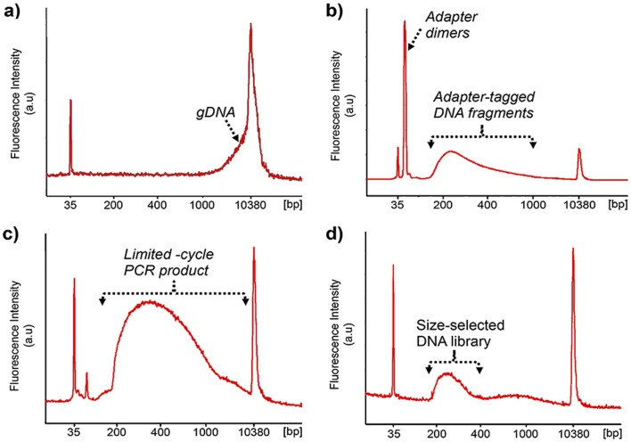 Analysis of human gDNA at different stages of the Nextera protocol. Bioanalyzer traces of a) gDNA, b) post-tagmentation, c) post-limited-cycle PCR and d) post-size-selection. Peaks at 35 and 10380 bp represent low- and high-molecular weight markers.