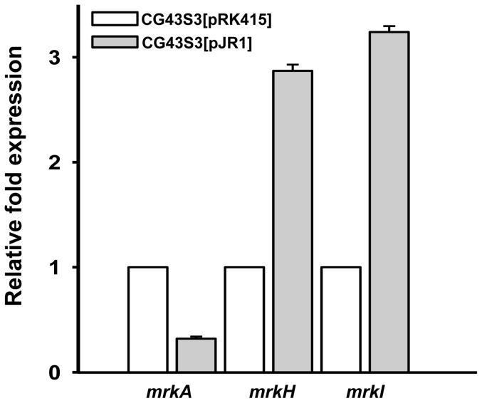 qRT-PCR analysis of the expression of mrkA , mrkH , and mrkI . Total RNA of K. pneumoniae CG43S3[pRK415] and CG43S3[pJR1] were isolated after the bacteria were grown overnight in LB supplemented with 12.5 µg/ml tetracycline. Specific primer pairs used to detect the expression of mrkA , mrkH , and mrkJ are listed in Table S2 . Relative fold expression was compared with the non-induced condition and determined by the 2 −ΔΔCt method (60). Error bars indicate standard deviation of the mean. Data are representative of three independent experiments.