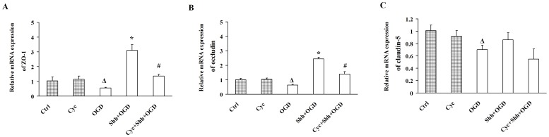 Shh Treatment Upregulates the Expression of ZO-1 and Occludin in BMECs under OGD. BMECs were pre-treated with PBS, Shh and/or cyclopamine (Cyc) for 30 min, and then subjected to the OGD for 4 h. (A-C) The mRNA levels of ZO-1 (A), occludin (B) and claudin-5 (C) were determined by real-time RT-PCR. Ctrl: cells were pre-treated with PBS and then subjected to normal oxygen condition. Cyc: cells were pre-treated with Cyc and then subjected to normal oxygen condition. OGD: cells were pre-treated with PBS and then subjected to OGD. Shh+OGD: cells were pre-treated with Shh and then subjected to OGD. Cyc+Shh+OGD: cells were pre-treated with Shh plus Cyc and then subjected to OGD. Δ P