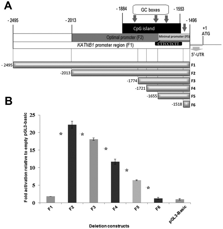Functional analysis of the KATNB1 promoter region. ( A ) The analyzed KATNB1 promoter region is 1000- bp (F1) excluding 5′-UTR. The CpG island is 332 nucleotides in length and positioned between -1884 and -1553. The optimal promoter region showing the highest promoter activity is 518- bp in length and positioned between -2013 and -1496 (F2). Location of <t>Elk1</t> consensus sequence (CTTCCTCTT) is indicated in the figure ( B ) Luminometric analysis of promoter constructs. SH-SY5Y cells were co-transfected with promoter constructs and pRL-TK Renilla luciferase vector. Results were calculated as fold activation relative to empty pGL3-basic vector. Error bars represent ± SD. Asterisk symbol (*) indicates p-value