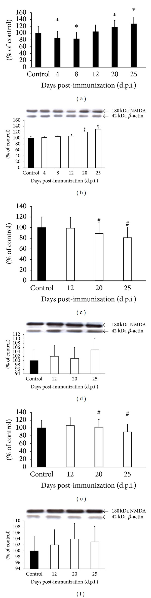 Expression of mRNA of NMDARs (a, c, and e) and protein (b, d, and f) in forebrain of control and EAE rats at different times post-immunization (a and b) and after therapeutic treatment with antagonists of NMDA receptors: amantadine (c and d) and memantine (e and f). Total RNA was prepared from healthy control rats, rats with EAE, and rats with EAE after therapy at the indicated d.p.i. Levels of NMDA mRNAs were determined by quantitative real-time PCR (see Section 2 ) and normalized to actin. Graphs (a), (c), and (e) present the results expressed as percentage of control from four independent experiments. * P