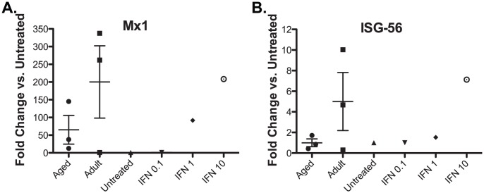 Plasma from aged Rhesus macaques have lower levels of bioactive IFN compared to adult animals. Plasma samples from adult (Animal #22855, 21551, 20374) and aged (Animal #20969, 22163, 20994) RM at 3 days post infection with CHIKV were serially diluted and used to stimulate Rhesus fibroblasts for 24 hours. Recombinant universal Type-1 IFN stimulated cells (0.1, 1, 10 units/ml) were used as positive controls and untreated cells were used as a negative control. Then total <t>RNA</t> was prepared with <t>Trizol</t> and IFN stimulated genes Mx1 (A) and ISG56 (B) were quantified by qRT-PCR using gene-specific primers. Fold change is determined as the ratio of gene expression treated vs. untreated control samples.