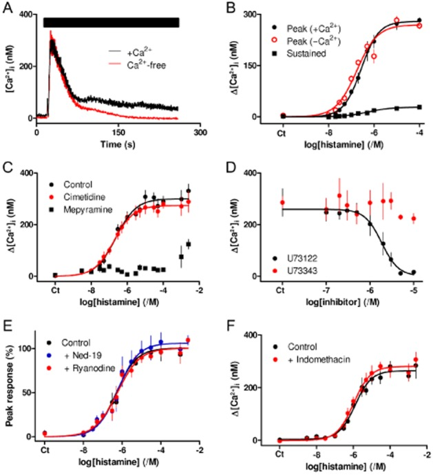 Histamine H 1 receptors stimulate an increase in [Ca 2+ ] i via IP 3 . (A) Histamine (100 μM, bar) stimulates an increase in [Ca 2+ ] i in populations of ASMC incubated in HBS or Ca 2+ -free HBS. Results show means ± SEM from three wells on a single 96-well plate and are typical of results from four independent plates. (B) Concentration-dependent effects of histamine on the peak [Ca 2+ ] i in the presence or absence of extracellular Ca 2+ , and on the sustained Ca 2+ entry (measured ∼230 s after histamine addition). Results are means ± SEM from four independent plates, with one to three wells on each plate. (C) Effect of mepyramine (0.5 μM) and cimetidine (50 μM), each added 5 min before histamine, on histamine-evoked Ca 2+ signals. Results are means ± SEM from nine independent plates, with one to three wells on each plate. (D) Effects of the indicated concentrations of U73122 and U73343 (added 5 min before histamine) on the peak increase in [Ca 2+ ] i evoked by histamine (100 μM). Results are means ± SEM from three independent plates, with two wells on each plate. (E) Effects of trans -Ned-19 (1 μM) and ryanodine (100 μM), each added 5 min before histamine, on the peak increase in [Ca 2+ ] i evoked by histamine. Results (percentage of the maximal response) are means ± SEM from three independent plates with one to three wells on each plate. (F) Effect of indomethacin (10 μM, added 5 min before histamine) on the peak Ca 2+ signals evoked by histamine. Results are means ± SEM from four independent plates, each with three wells. (B–F) Ct denotes control.