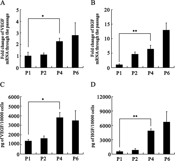 Effects of passage number on mRNA expression and secretion of VEGF and HGF. Passage numbers were shown as P1, P2, etc. (A- D) Total mRNAs were extracted from three different rat ASCs and reverse transcribed into cDNA. The VEGF (A) and HGF (B) mRNA expression levels were analyzed using real-time PCR analysis. Values were normalized to the level of GAPDH mRNA and expressed relative to normalized values of P1. Secretion of VEGF (C) and HGF (D) by rat ASCs ( n = 3) cultured over 72 hours was measured by ELISA. The data represent the mean ± SEM. * p