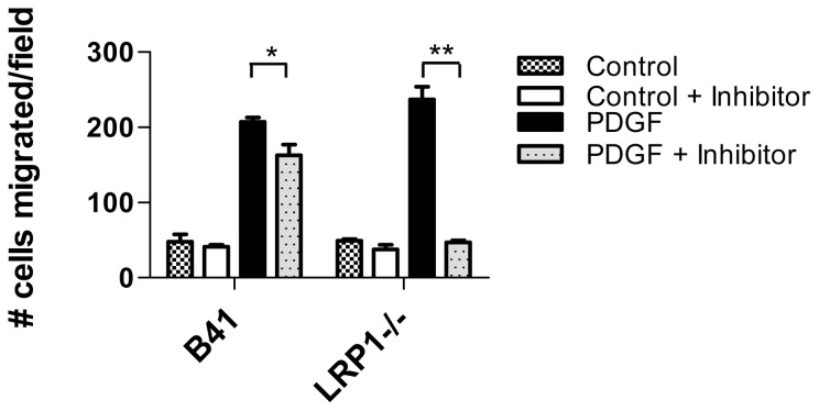 LRP1 modulates SHP-2-mediated migration in response to PDGF-B. LRP expressing (B41) and deficient (LRP −/− ) fibroblasts were seeded onto 5 µm costar transwell filters at 2×10 4 cells per well either in the presence or absence of the SHP-2 inhibitor, NSC-87877. After 3 h incubation at 37°C, either buffer (control) or PDGFB (30 ng/ml) was applied to the bottom chamber and incubation continued for 4 hours at 37°C. After incubation, the topsides of filters were cleared of cells with a cotton swab, and cells remaining on the bottom of the filters were fixed and the nuclei were stained with DAPI overnight. Filters were mounted onto glass slides and nuclei were quantified. (*p = 0.02, **p