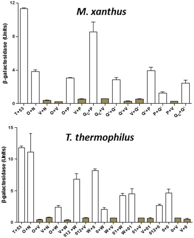 Quantification of β-galactosidase in Y2H experiment. The upper and lower panels show the β-galactosidase activity for Pil protein interactions in Y2H experiments from M. xanthus and T. thermophilus , respectively. The values for β-galactosidase activity were the average of three independent experiments and samples in each experiment were analyzed in triplicate. See Figure 4 for protein designations under each panel. The bars for the vector controls are shaded for comparison. See text and Materials and Methods for more details.