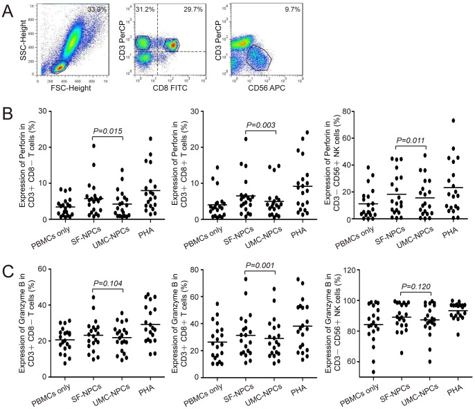 <t>Perforin</t> and granzyme B expressions in <t>PBMCs</t> co-culture system with NPC stimulation. (A) Analysis of surface phenotypic markers (CD3, CD8, CD56) of T cells and NK cells. PBMCs (n = 20) co-cultured with SF-NPC or UMC-NPC were labeled with different fluorescence-conjugated antibodies, dividing into three obvious cell groups (CD3+CD8− T cells, CD3+CD8+ T cells and CD3−CD56+ NK cells) monitored by flow cytometry analysis. (B and C) Analysis of perforin and granzyme B expression in T cells and NK cells. Differences between groups were analyzed by paired-samples t -tests ( P