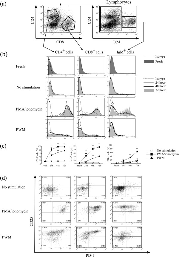 Recognition of PD-1-expressing lymphocytes by anti-PD-1 mAb. (a) Gating strategies for CD4 + T cells, CD8 + T cells and IgM + B cells in bovine lymphocytes. (b) Representative histograms obtained by flow cytometry of PD-1 expression in CD4 + T cells, CD8 + T cells and IgM + B cells isolated from three BLV - cattle. Freshly isolated PBMC were stained with anti-PD-1 (5D2), CD4, CD8, and IgM Ab. PBMC were cultivated with PBS (No stimulation), PMA/ionomycin, and PWM for 24, 48, and 72 h, and stained in a similar way. (c) Proportions of PD-1 positive cells in CD4 + T cells, CD8 + T cells and IgM + B cells. Statistical comparisons between percentages of PD-1 positive cells stimulated with PBS and PMA/ionomycin or PWM were made using two way ANOVA. Differences were considered statistically significant at P